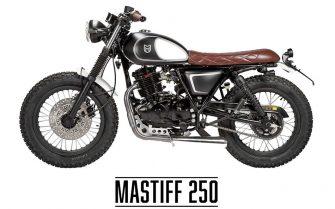 mutt mastiff 250
